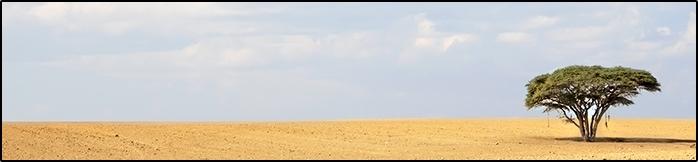 _desert-one-tree-200815-698w162h-FINAL